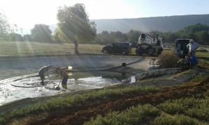 limpieza de estanque con peces